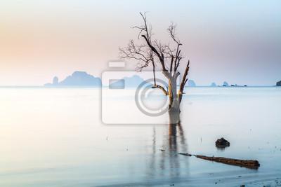Martwych drzew stojących, że zginęli w morzu.