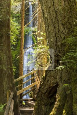 Marymere Falls a Trail