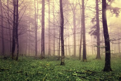 Obraz Marzycielski drzew leśnych