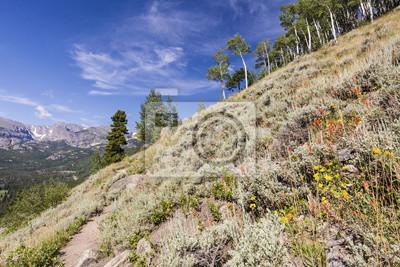 Mędrzec i Wildflower Mountainside