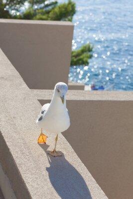 Obraz Mewa chodzenie na balkonie