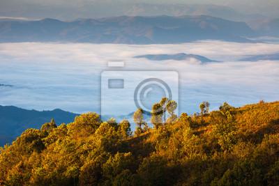 Mgła nad góry, park narodowy Doi Inthanon, Tajlandia