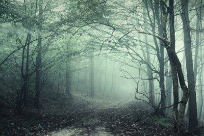 Obraz Mgła w lesie