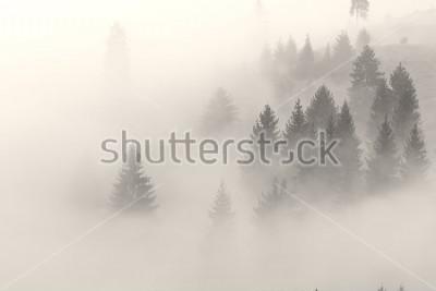 Obraz Mgła wspina się na wzgórzu przed wschodem słońca.
