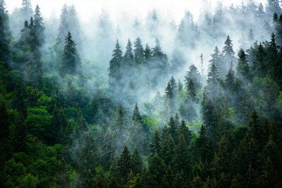 Obraz Mglisty krajobraz górski