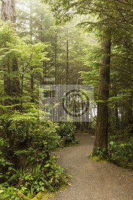 Mglisty Poranek na Wild Pacific Trail