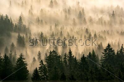 Obraz mgły czytać