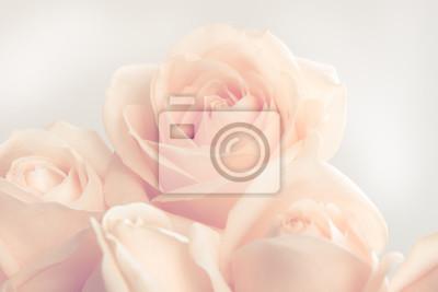 Obraz Miękkie pełnowartościowy beżowy róż jako neitral tle. Selektywne fokus.