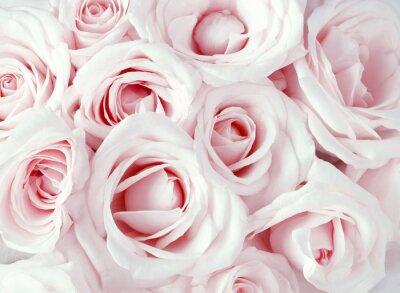 Obraz Miękkie pełnowartościowy różowe róże