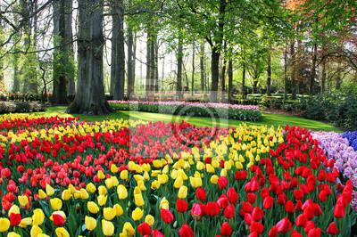 Obraz Mieszanka tulipanów i hiacyntów Holland
