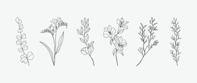 Obraz Minimal botanical hand drawing design for logo and wedding invitation. Floral line art.  Flower and leaves design collection for bouquets decoration, card and packaging background.