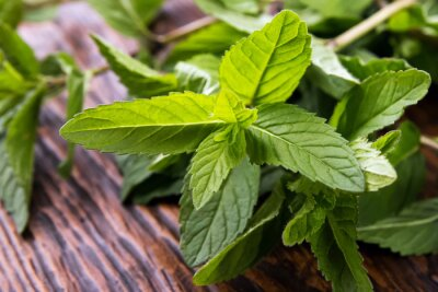 Obraz Mint leaves on the table