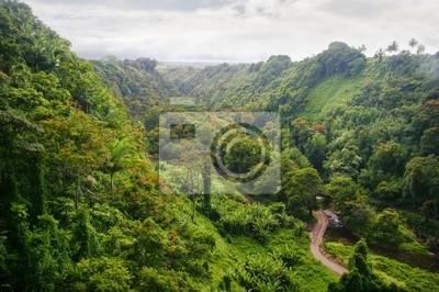 Mocowania i dżungla w mglisty pogody. Big Island. Hawaii. USA