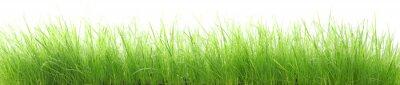 Mokra trawa w wysokiej rozdzielczości