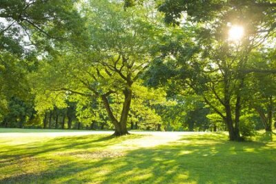 Obraz morning garden