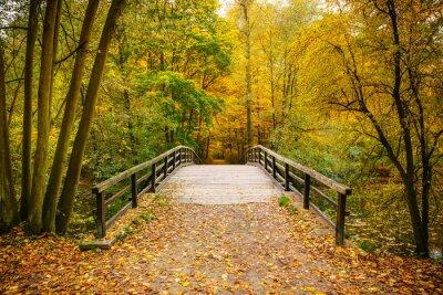 Obraz Most w lesie jesienią