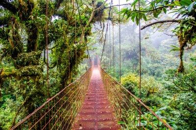 Obraz Most w Rainforest - Kostaryka - Monteverde