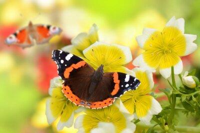 Obraz Motyl 141