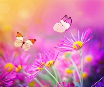 Obraz Motyl i kwiat