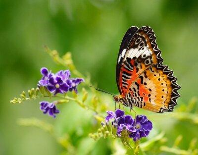 Obraz Motyl na fioletowy kwiat