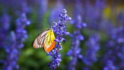 Obraz Motyl na kwiat