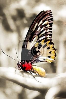 Motyl siedzi na ręce - stonowanych obraz