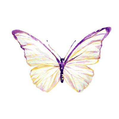 Obraz motyle projekt
