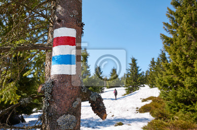 Mountain hiking trail marking on a tree trunk in Karkonosze National Park in the spring, Poland.