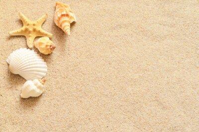 Obraz Muszle na piasku