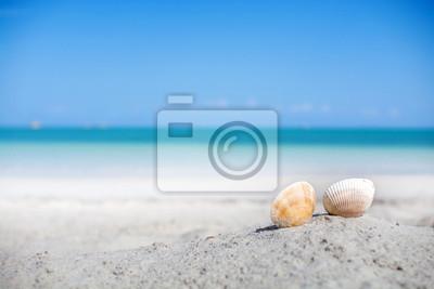 Muszle na piasku plaży