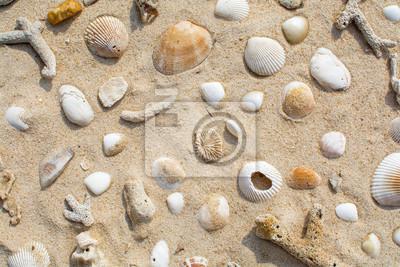 Muszle na widoku z góry piasku plaży