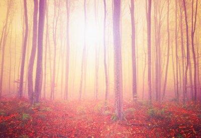 Obraz Mystic las światło
