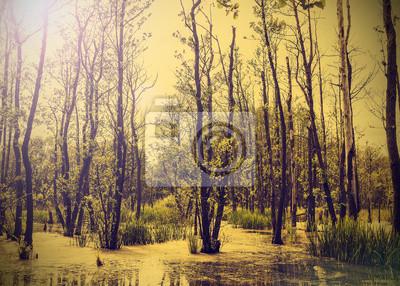 Natura zabytkowe tła z drzew.