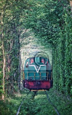 Natural Tunel miłości tworzą drzew na Ukrainie