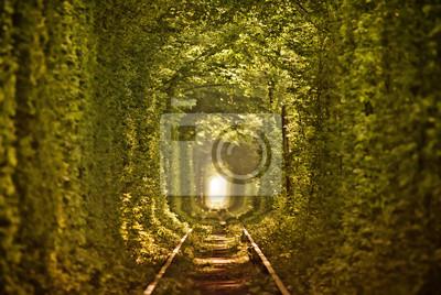 Natural Tunnel of Love utworzone przez drzew na Ukrainie