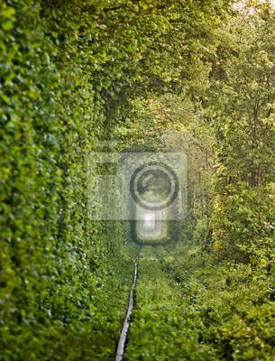 """Naturalny """"Tunel miłości"""" ukształtowany drzewami na Ukrainie"""