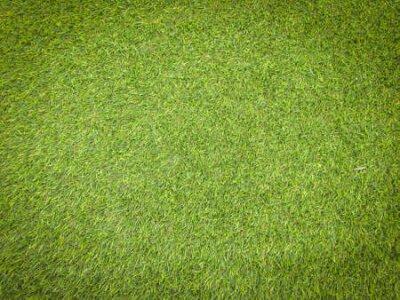 Obraz Nature green grass texture background for design. Eco concept.