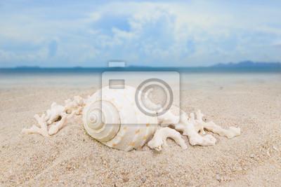 Nautilus muszle morza na piaszczystej plaży tle kolekcji
