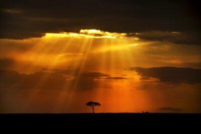 Obraz Niebiańskie promienie na krajobraz Afryki
