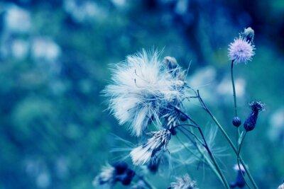 Obraz Niebieski abstrakcyjna kwiat dandelion tła
