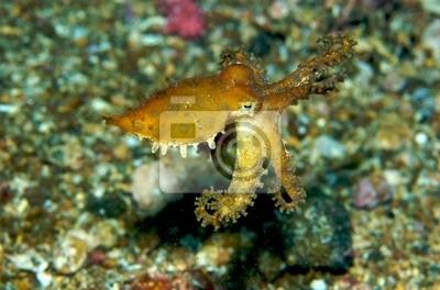 Niebieski pierścień Octopus