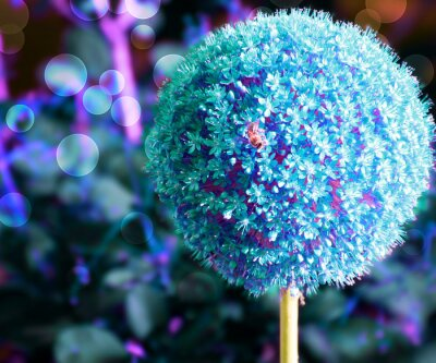 Obraz Niebieskie tło Flower Czosnek