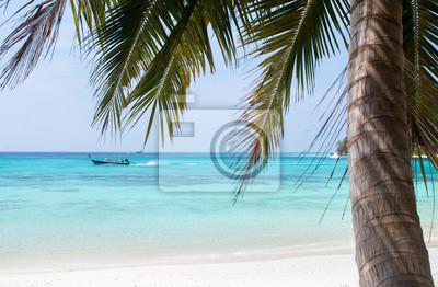 Niebo palma morze, plaża i kokos w sezonie letnim
