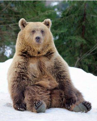 Obraz Niedźwiedź w zimie
