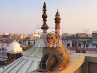 Obraz Nowe Delhi