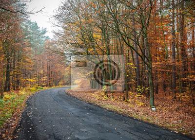 Obraz drogi w jesiennych lasów.