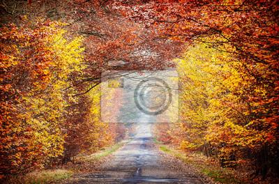 Obraz drogi w mglisty jesienny las.