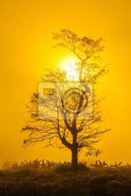 Obraz piękny krajobraz z drzew sylwetka na zachodzie słońca