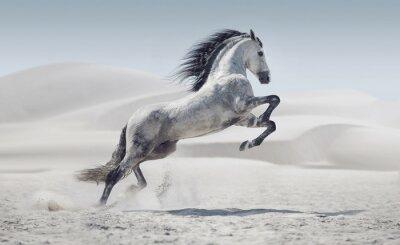 Obraz Obraz przedstawiający galopujący koń biały