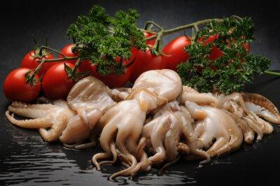 Obraz Octopus globosus
